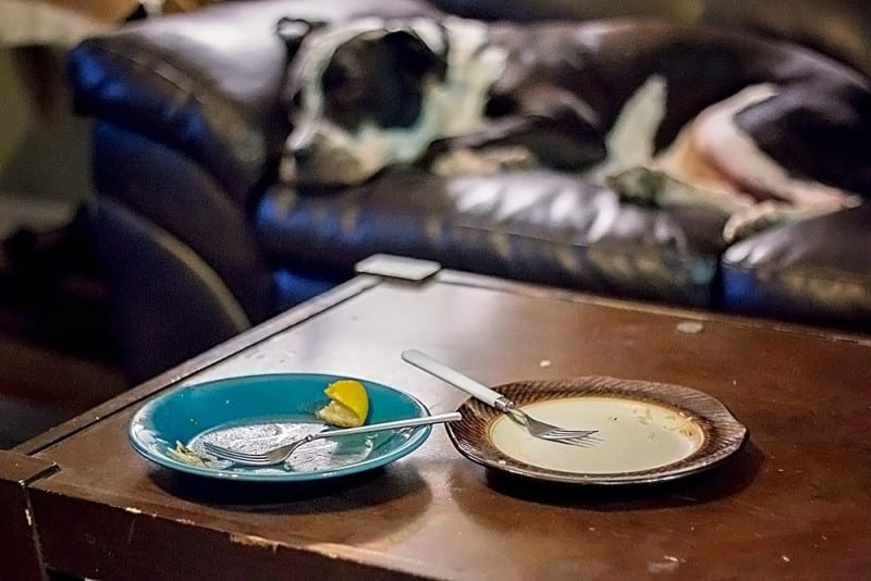 empty plates sitting on table showing cooking skills with dog in background